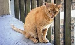 los-gatos-y-sus-escapadas_bq0d1