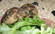 los-mejores-alimentos-para-las-tortugas_zkawm