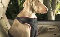 los-mejores-cinturones-de-seguridad-para-los-perros_xhzf9