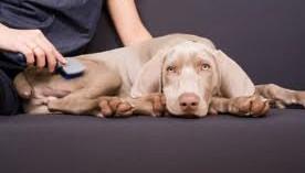 los-mejores-consejos-para-cuidar-el-pelo-de-los-perros_a03xg