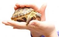 los-mejores-cuidados-para-las-tortugas_kt6x3