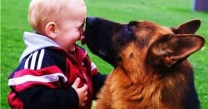 los-mejores-perros-alemanes_6baog