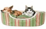 los-mejores-productos-naturales-para-mascotas_yip06