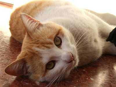 Los parásitos en los perros y gatos