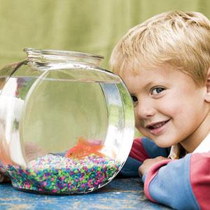 Los peces son la primera mascota ideal para niños