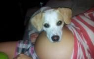 los-perros-como-mascota-benefician-a-las-mujeres-en-el-embarazo_ve956