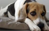 los-perros-deprimidos_c2wpx