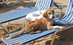 los-perros-en-el-campo-y-en-la-playa_xbwvc