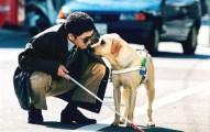 los-perros-lazarillos_az5st