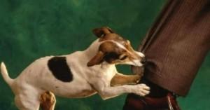 los-perros-que-ladran-muchas-veces-si-muerden-como-saberlo_nv6cg