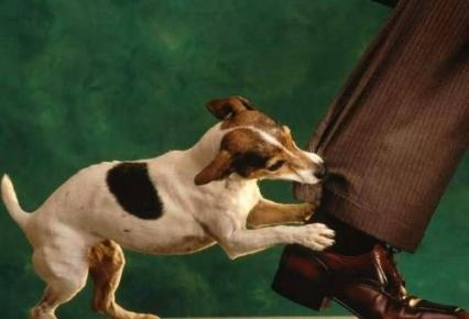 los perros le ladran: