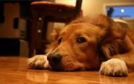 los-perros-tienen-miedo-a-los-ruidos-fuertes_auz1e
