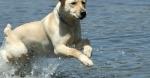 los-perros-y-el-agua_1a9l5