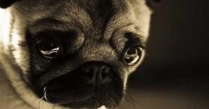 los-perros-y-la-depresion_31bg5