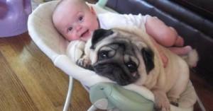 los-perros-y-sus-celos-por-los-ninos_mfah0