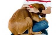 los-perros-y-sus-miedos-con-los-extranos_9qi0y