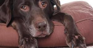 los-productos-toxicos-mas-peligrosos-para-el-perro-en-el-hogar_njvxd