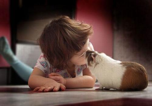 Mascotas exóticas ideales para niños