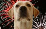 mascotas-y-los-ruidos-explosivos-de-navidad-y-ano-nuevo_azs6u