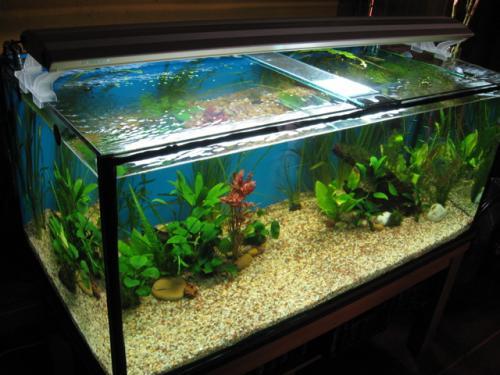 Materiales para montar un acuario de agua dulce caliente for Acuario tortugas
