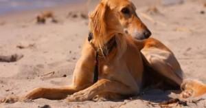 me-voy-a-la-playa-con-mi-perro_nrm39