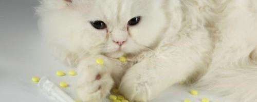 medicamentos-letales-para-los-gatos_lbcpt