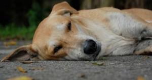 mi-perro-acaba-de-morir_96zrn