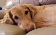 mi-perro-sufre-de-convulsiones_h58e0
