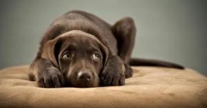 mi-perro-tiene-miedo-a-los-extranos_04b98