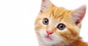 mi-primer-gato-que-errores-debo-evitar_smt4o