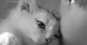 mitos-y-mas-mitos-acerca-de-los-gatos_h42ux