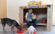 nino-abre-refugio-para-perros-y-gatos-abandonados_n9eu8