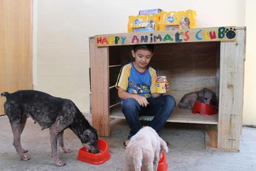 Niño abre refugio para perros y gatos abandonados