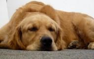 no-abandones-a-los-perros-en-su-vejez_o18yh