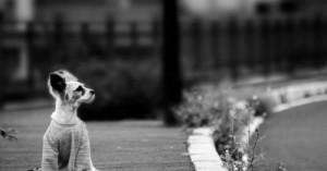 no-abandones-a-tu-perro-el-nunca-lo-haria-contigo_6bpij