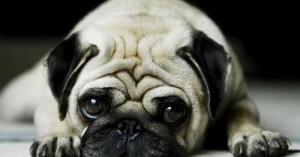 no-debes-humanizar-a-los-perros_nb5h4