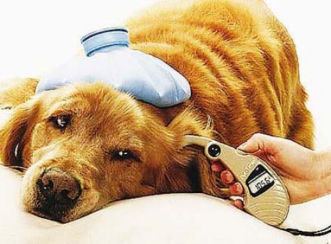Nuestro perro hipocondriaco