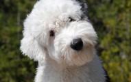 ofrece-satisfaccion-a-tus-perros_c05bu