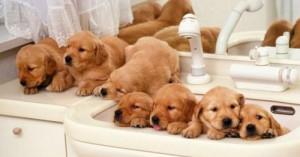 paciencia-para-criar-y-cuidar-de-cachorros_f1uy6