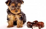 pancreatitis-canina_7usio