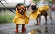 pasear-con-el-perro-en-los-dias-de-lluvia_a3ed7