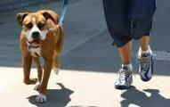 paseos-por-la-manana-con-tu-perro_1on3w