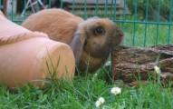peligros-externos-para-los-conejos-con-mayor-libertad_dsylo
