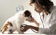 perros-con-diabetes_gj49e