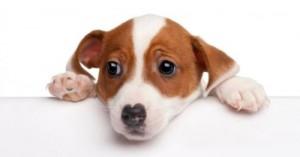 perros-con-miedo-a-los-ninos_6nrzw