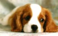 perros-deprimidos_ukf6w