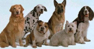 perros-energicos-y-muy-dinamicos_mzbdj