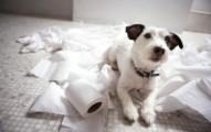 perros-hiperactivos_25u1h
