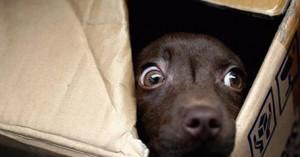 perros-y-consejos-para-que-superen-las-fobias_dp1mh