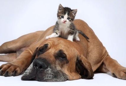 Perros y gatos viviendo en armonía